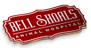 Veterinarian | Animal Hospital