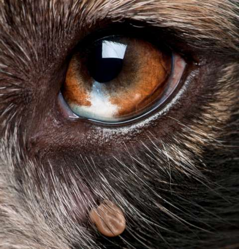 Does Your Dog Really Need a Lyme Disease Vaccination? Find Out.