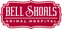 Bell Shoals Animal Hospital | Brandon FL